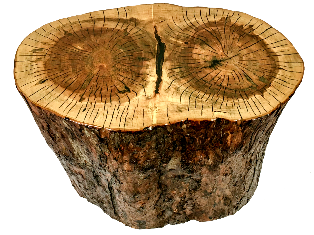 Solid maple stump coffee table