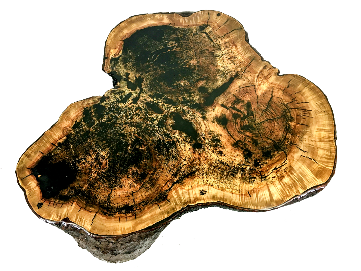 three-tree maple stump coffee table
